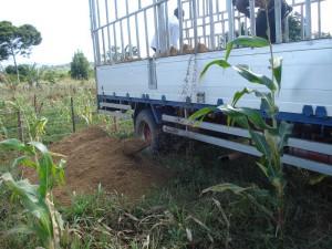 008cDSC04670 crop